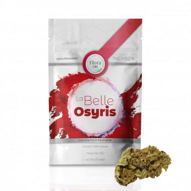 La belle Osyris - Fleur CBD 1g