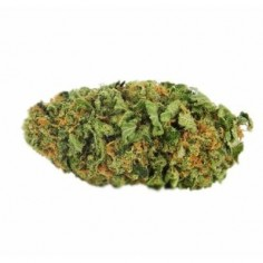 Fleur de CBD – NORTHERN LIGHT 1G